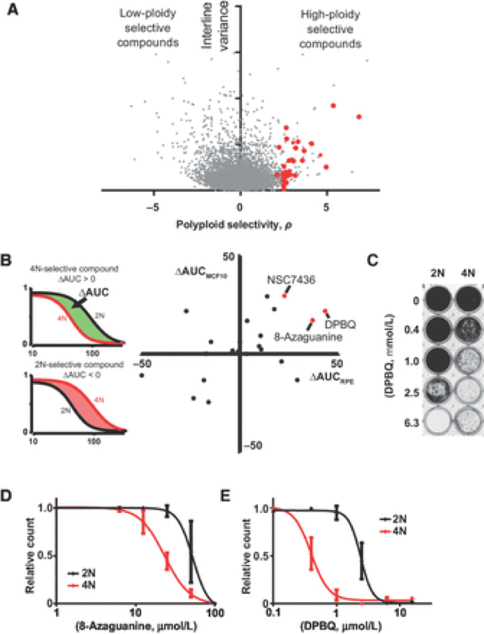 Identification of DPBQ as a polyploidy-selective compound